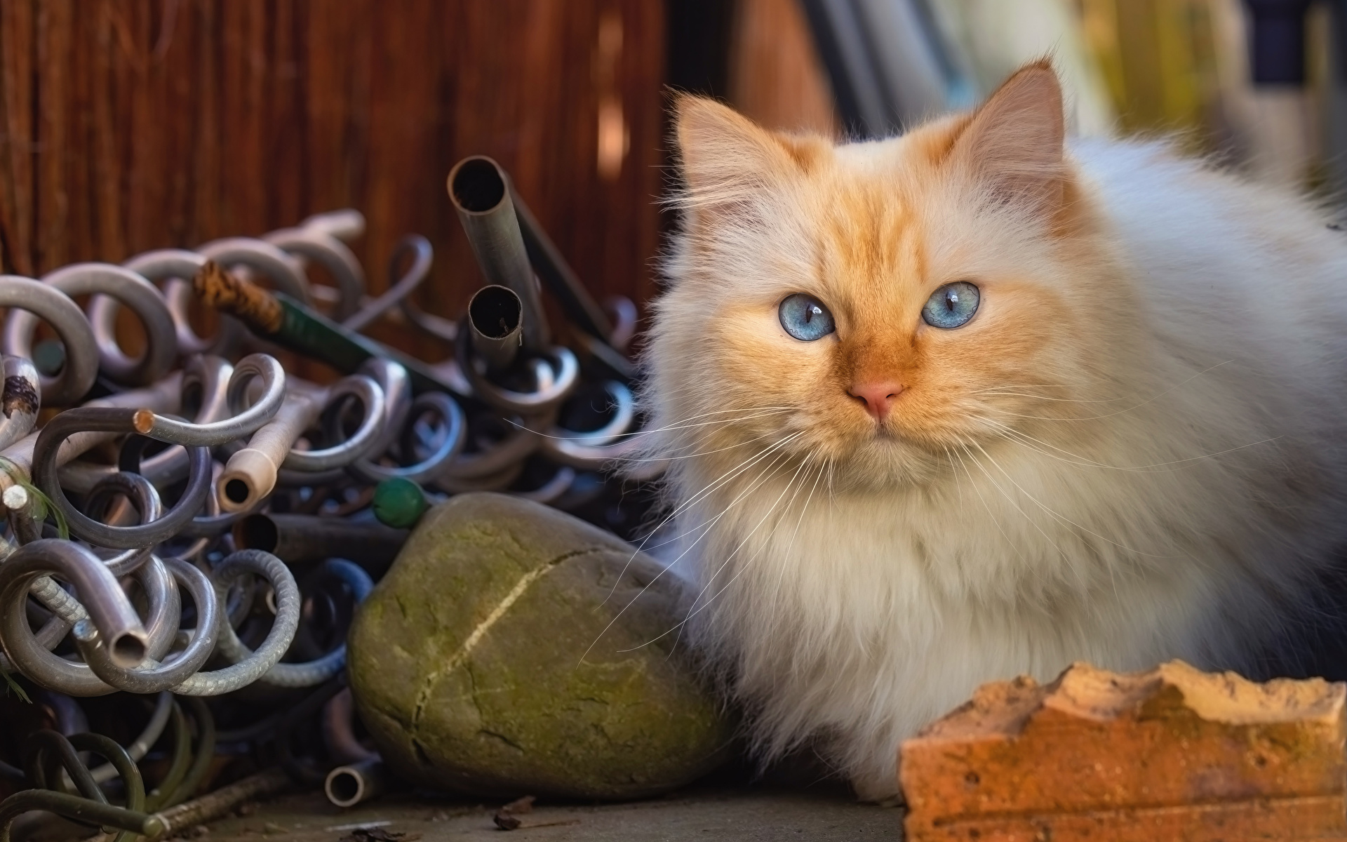 Fotos von Katzen Blick Tiere 1920x1200 Katze Hauskatze Starren ein Tier