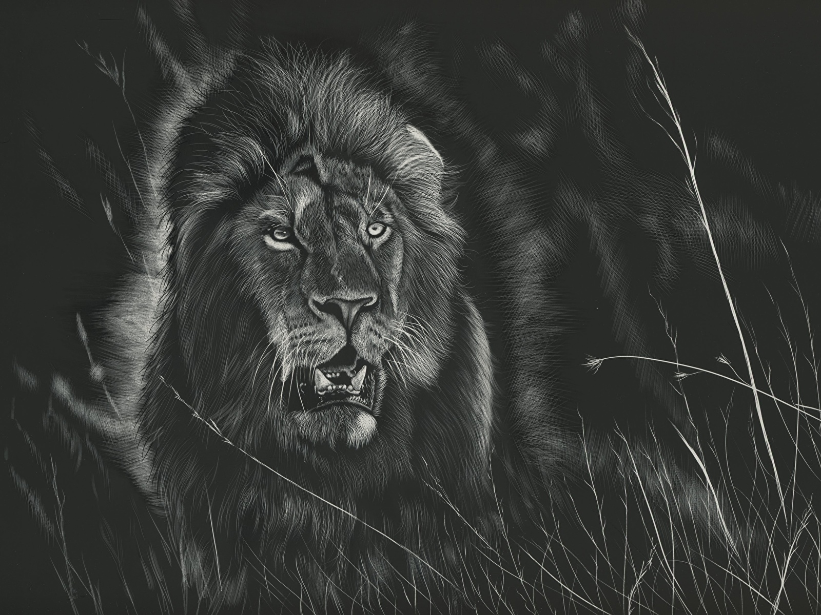 Fonds Decran 1600x1200 Fauve Lions Dessiné Noir Et Blanc
