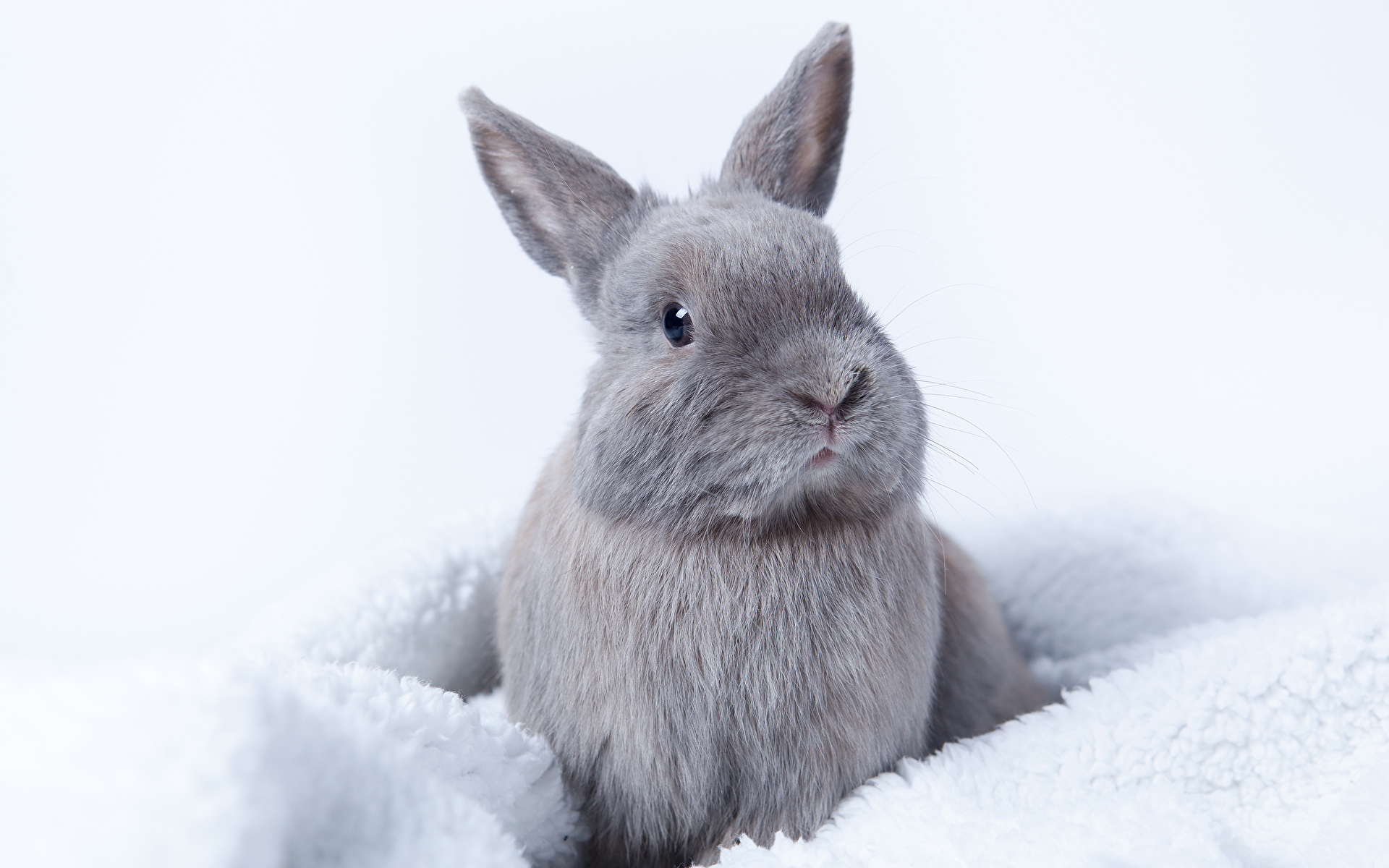 Images rabbit gray animal 1920x1200 Rabbits Grey Animals