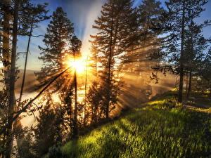Bilder Sonnenaufgänge und Sonnenuntergänge Lichtstrahl Gras Bäume HDRI Sonne
