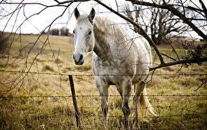 Bilder Pferd Starren Ast Kopf Gras ein Tier