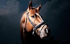 Fotos Pferd Kopf Blick ein Tier