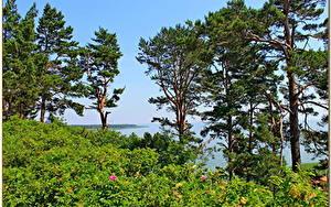 Fotos Landschaftsfotografie Litauen Bäume Nida Natur