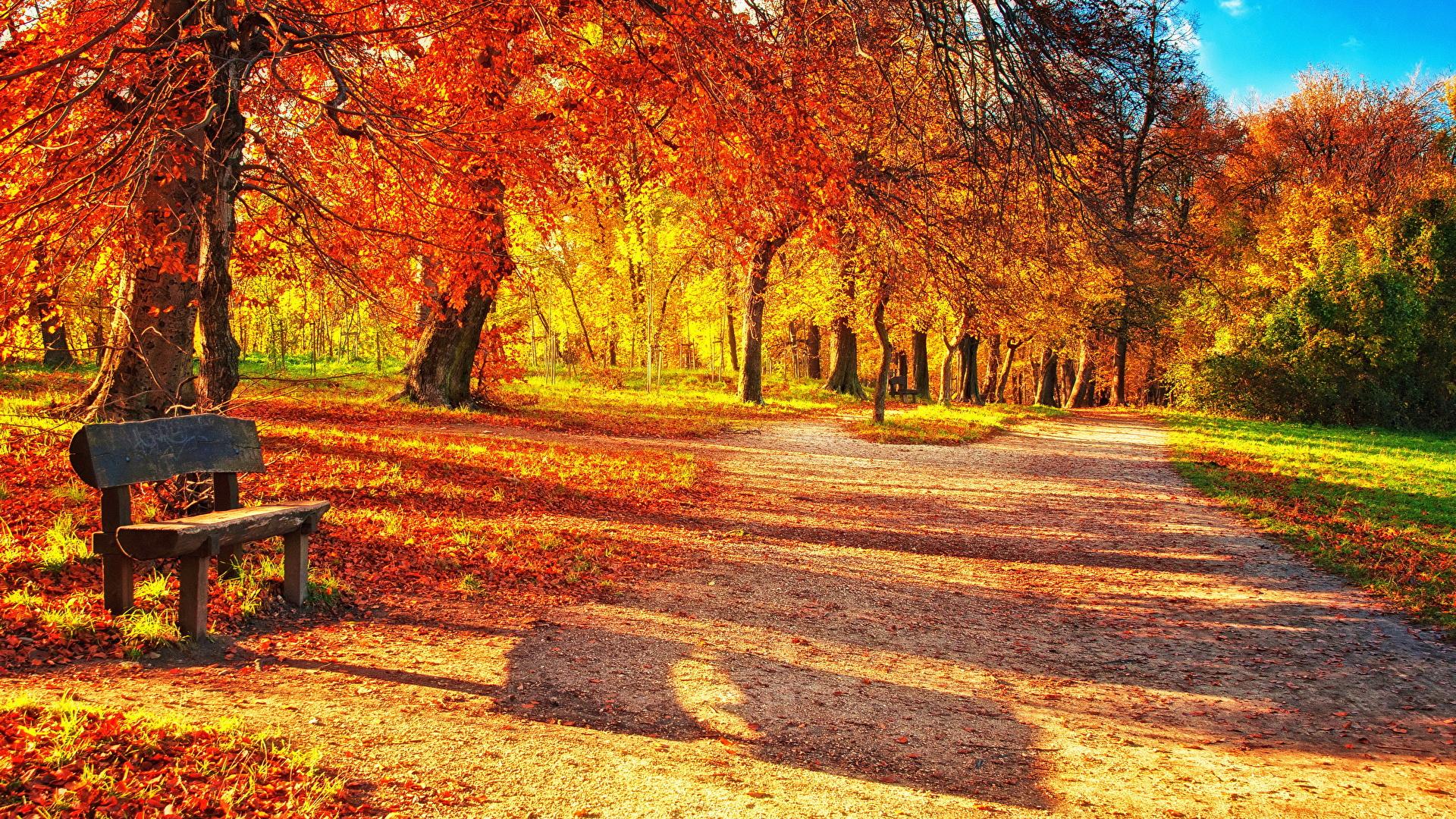 壁紙 19x1080 季節 秋 公園 木の葉 ベンチ 自然 ダウンロード 写真