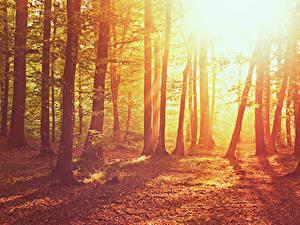 Fotos Wälder Bäume Sonne