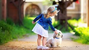Bilder Hunde Kleine Mädchen Rock Bologneser kind