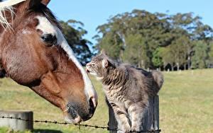 Hintergrundbilder Pferd Hauskatze Kopf ein Tier