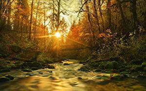 Bilder Flusse Frankreich Brücken Wälder Sonne Saint-Claude