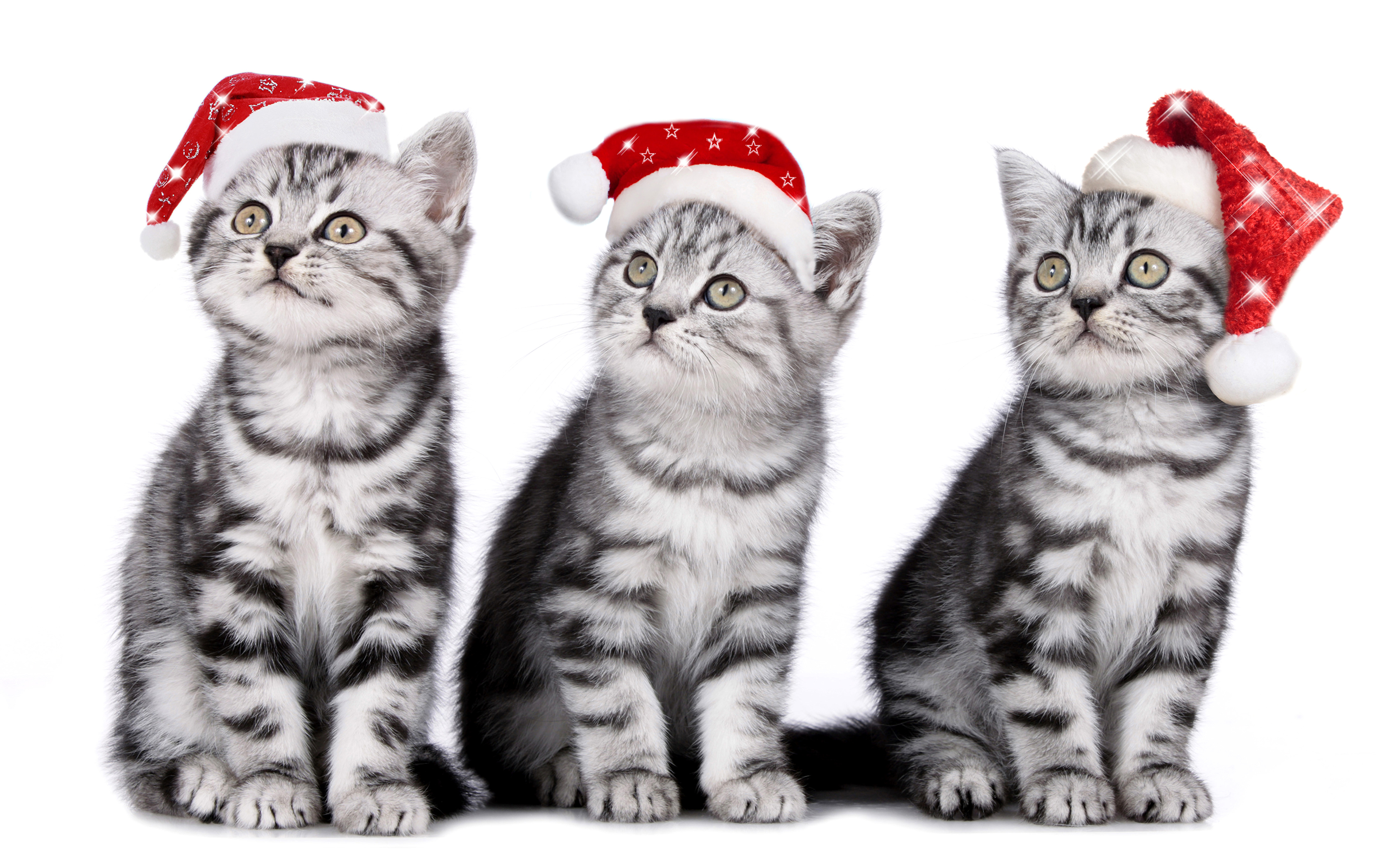 kitty cat Cats New year Winter hat ...