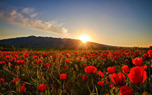 Hintergrundbilder Sonnenaufgänge und Sonnenuntergänge Mohn Felder Sonne Blumen
