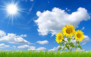 Hintergrundbilder Landschaftsfotografie Himmel Sonnenblumen Gras Wolke Sonne