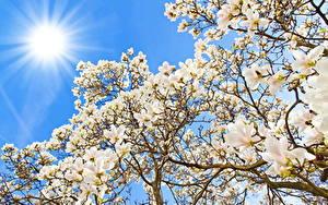Fotos Blühende Bäume Sonne Blüte
