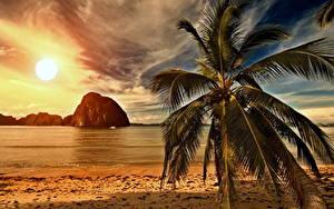 Hintergrundbilder Sonnenaufgänge und Sonnenuntergänge Küste Palmengewächse Sonne