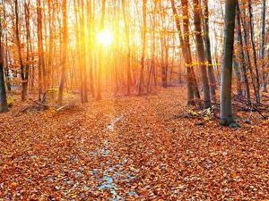 Bilder Jahreszeiten Herbst Wälder Baumstamm Lichtstrahl Blatt Sonne