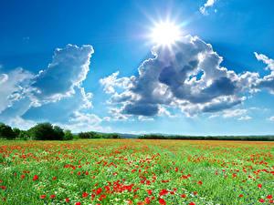 Bilder Jahreszeiten Sommer Acker Landschaftsfotografie Mohn Himmel Wolke Sonne Natur
