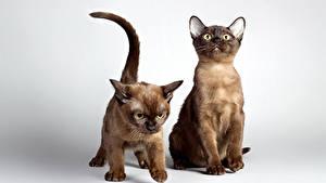 Wallpaper Cats 2 Kitty cat animal