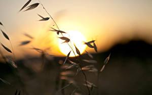 Hintergrundbilder Sonnenaufgänge und Sonnenuntergänge Großansicht Gras Sonne
