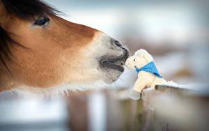 Hintergrundbilder Pferde Spielzeug Kopf Tiere