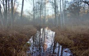 Bilder Wald Bäume Nebel Sumpf