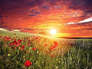 Hintergrundbilder Landschaftsfotografie Sonnenaufgänge und Sonnenuntergänge Felder Himmel Mohn Sonne
