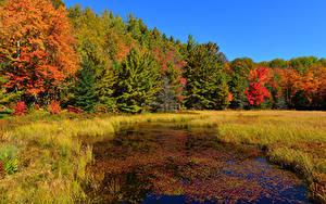 Fotos Herbst Wald Bäume Gras Sumpf
