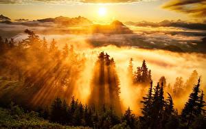 Bilder Sonnenaufgänge und Sonnenuntergänge Gebirge Lichtstrahl Bäume Nebel Wolke Sonne
