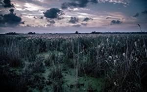Bilder Himmel Wolke Sumpf Gras Natur