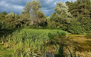 Bilder Sommer Bäume Sumpf