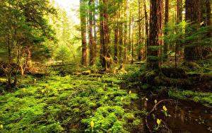 Fotos Wälder Bäume Sumpf Laubmoose