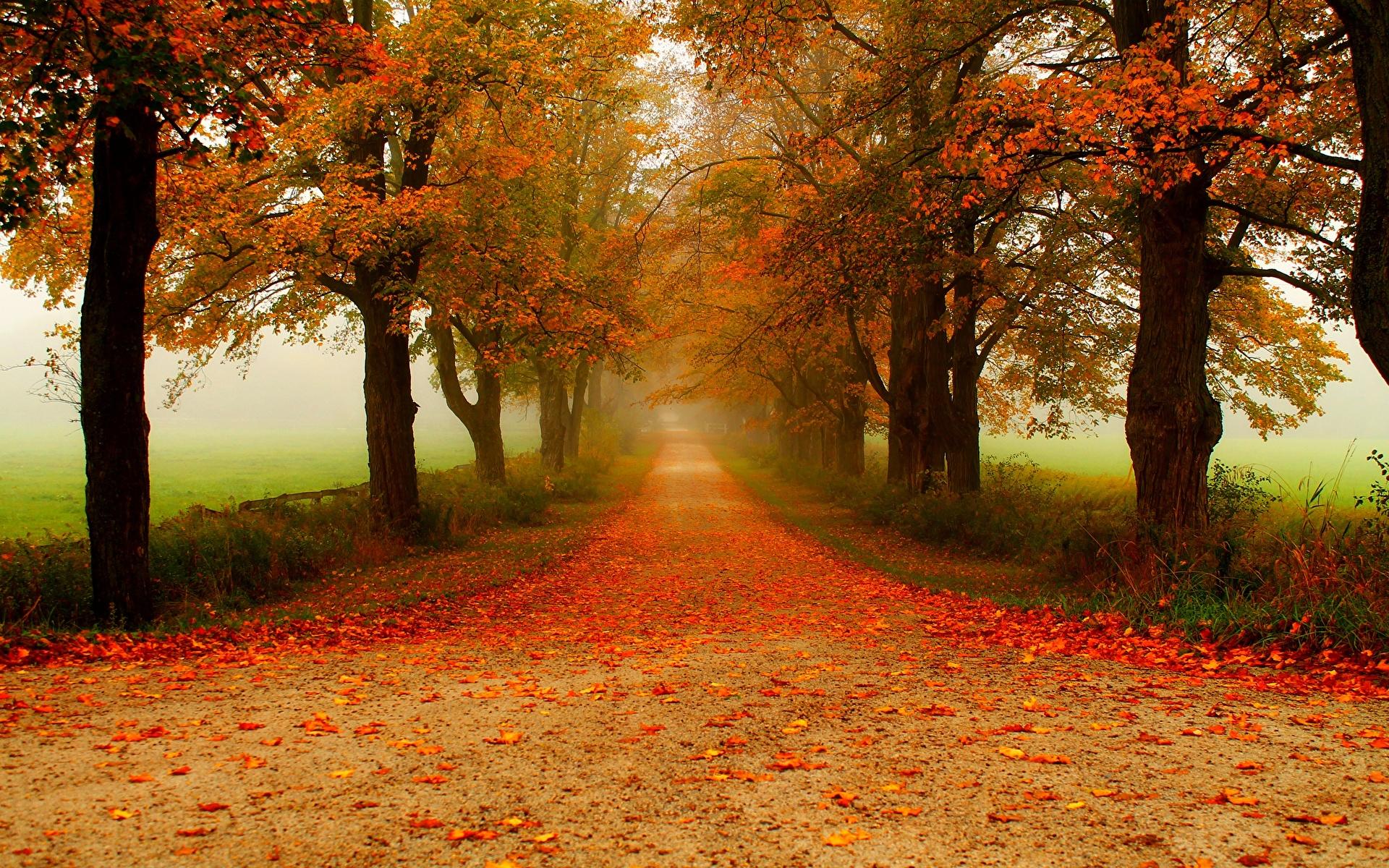 Foto Foglie Natura Avenue Autunno parchi Alberi 1920x1200 Foglia Parco