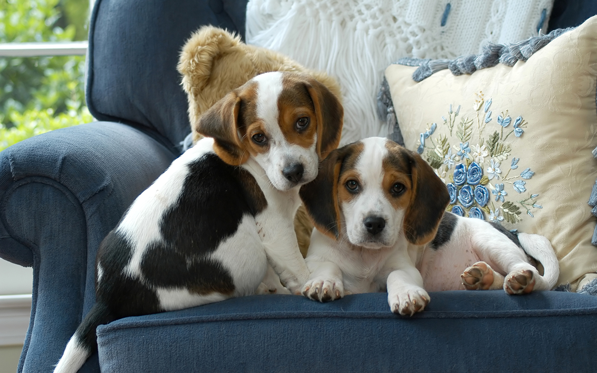 Wallpaper Beagle puppies dog Two Couch animal 1920x1200 Puppy Dogs 2 Sofa Animals
