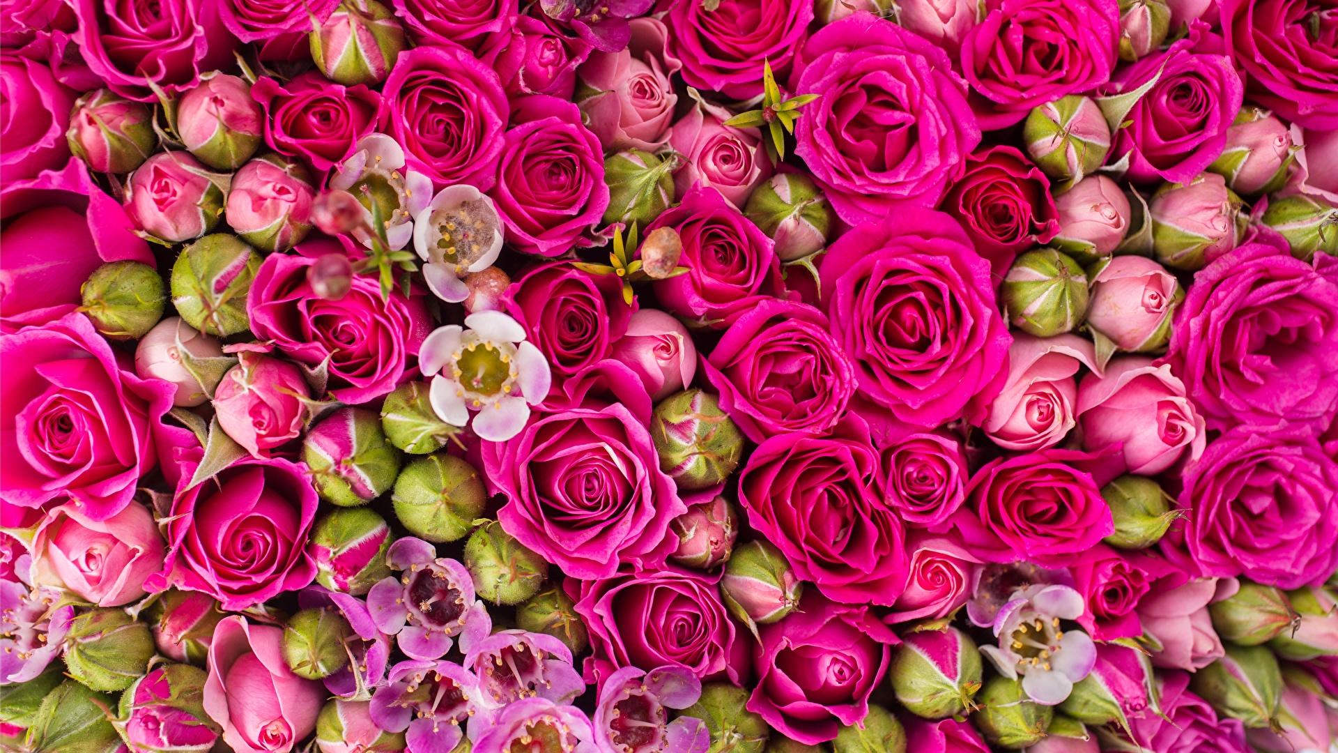 壁紙 1920x1080 テクスチャー バラ ピンク 花 ダウンロード 写真