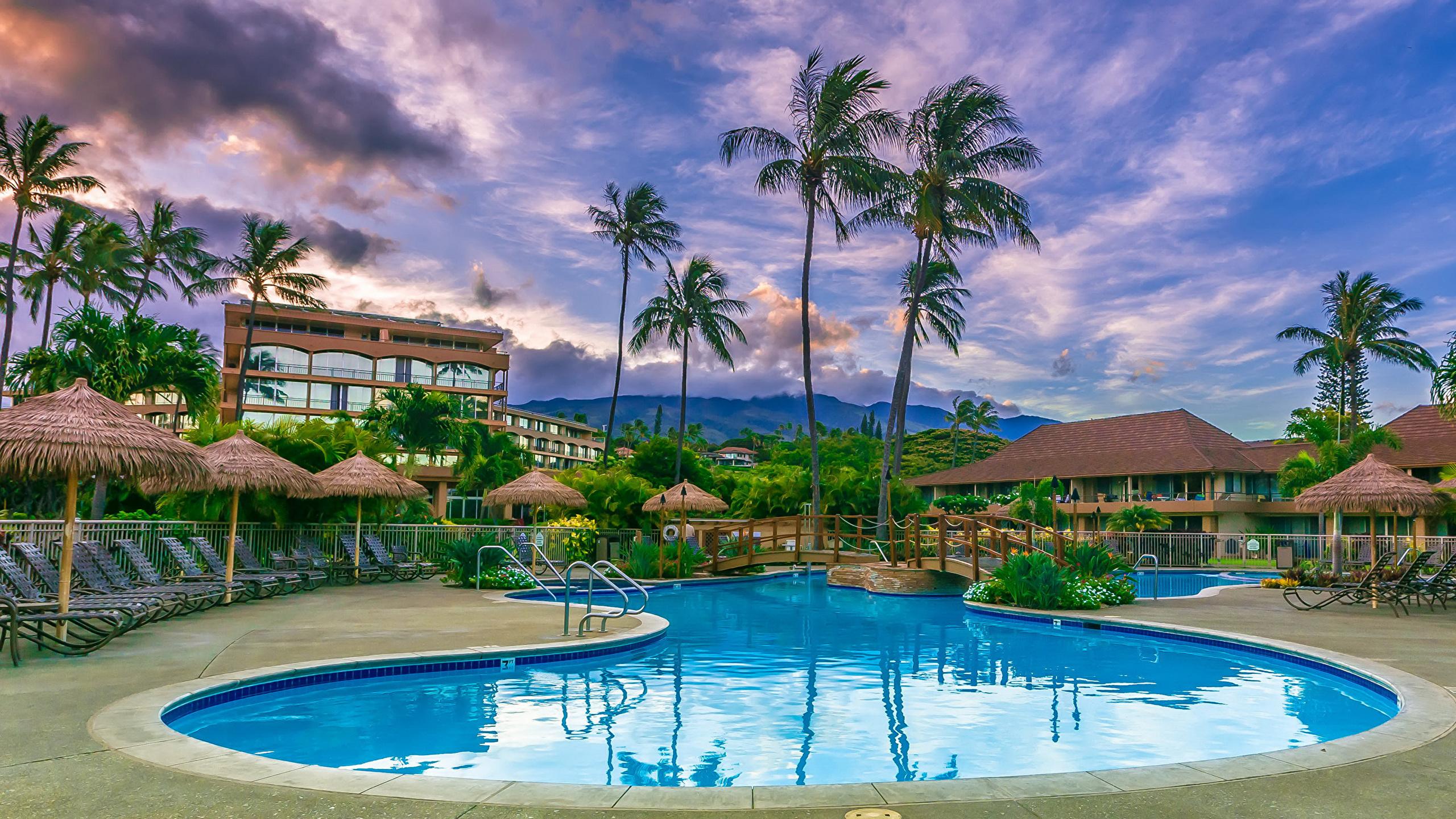 壁紙 2560x1440 リゾート 住宅 Maui ハワイ州 プール ヤシ