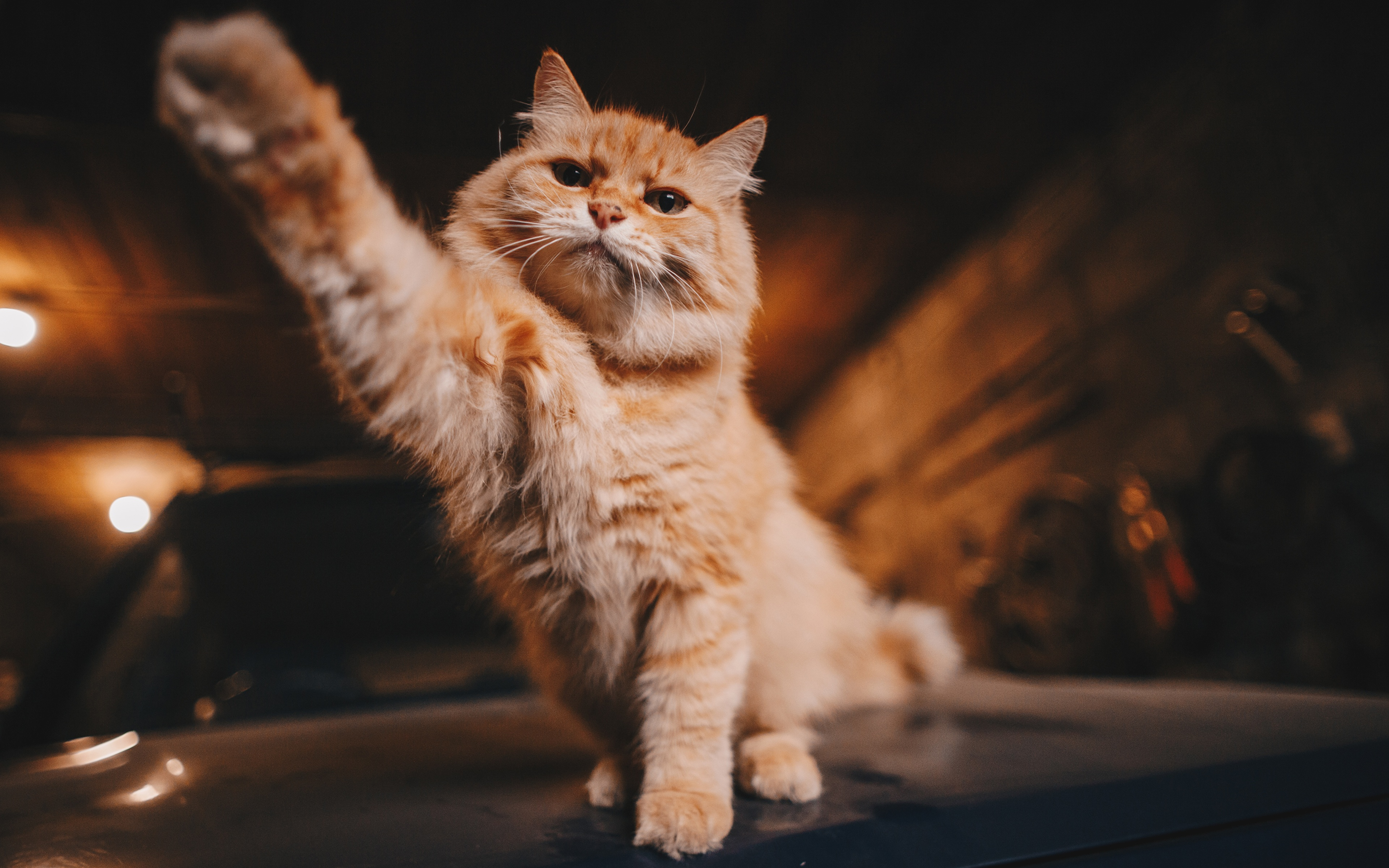 Картинки по запросу зигующий кот