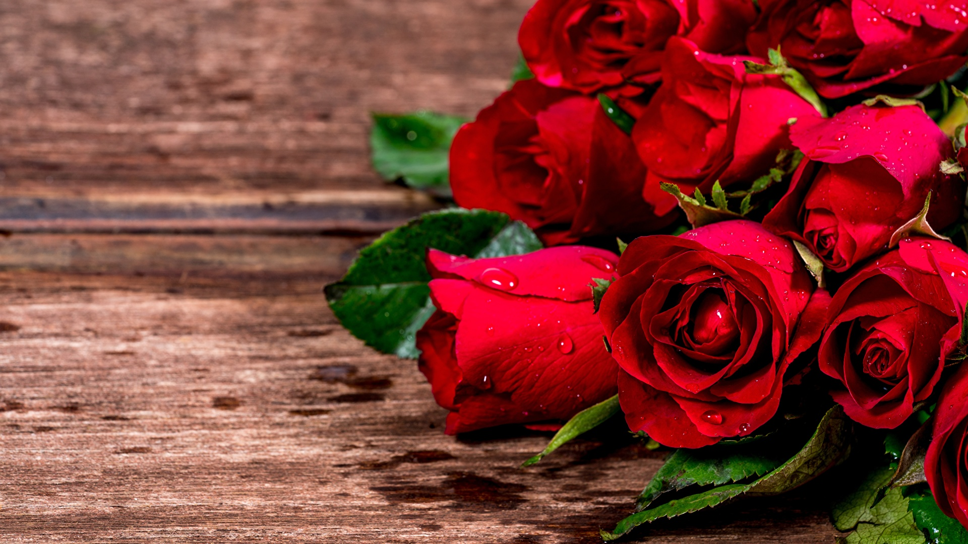 Picture Red Roses Flowers Closeup 1920x1080