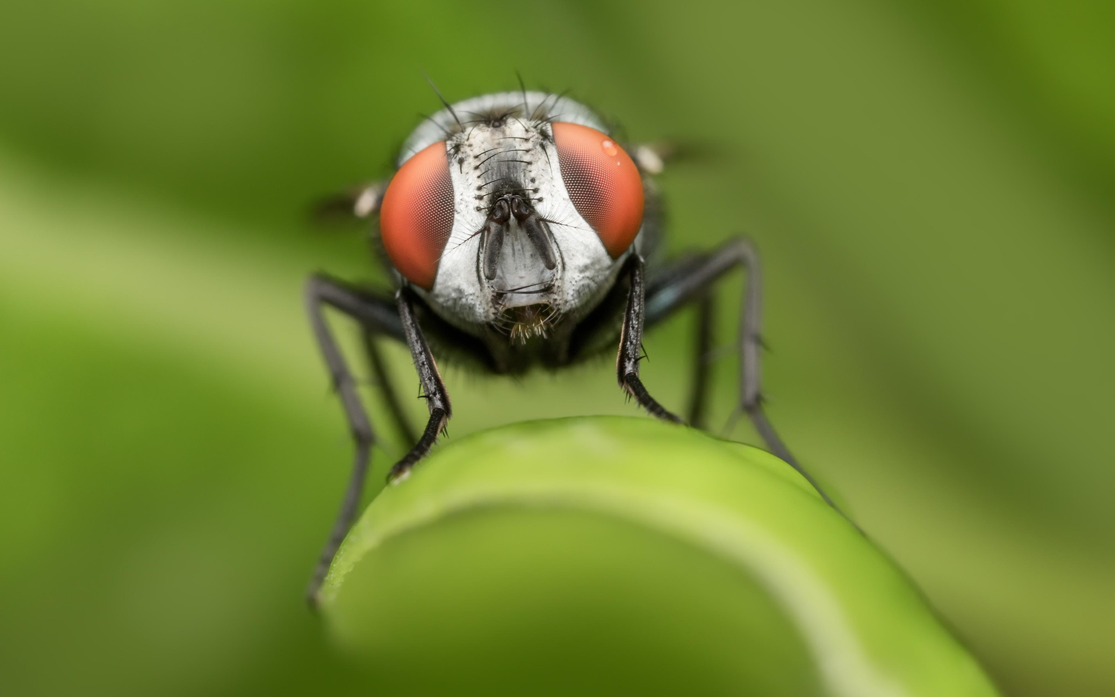Bilder von Fliegen Bokeh Tiere hautnah 3840x2400 unscharfer Hintergrund ein Tier Nahaufnahme Großansicht