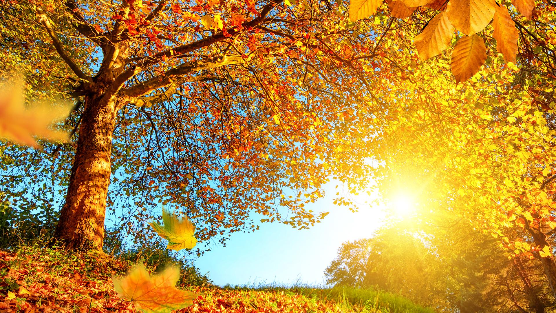 壁紙 19x1080 秋 木 木の葉 自然 ダウンロード 写真