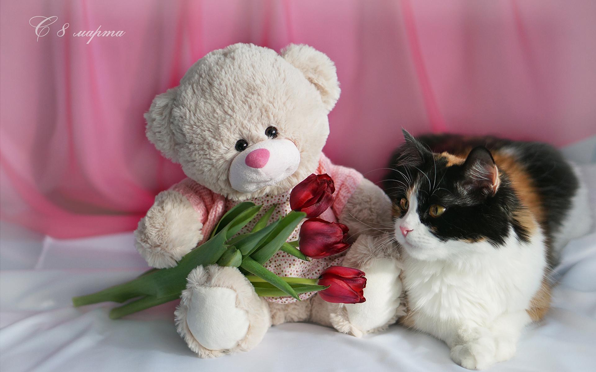 Hintergrundbilder Katze Internationaler Frauentag Russische Rot Tulpen Blumen Teddybär Drei 3 Tiere Feiertage 1920x1200 8 März Teddy Knuddelbär