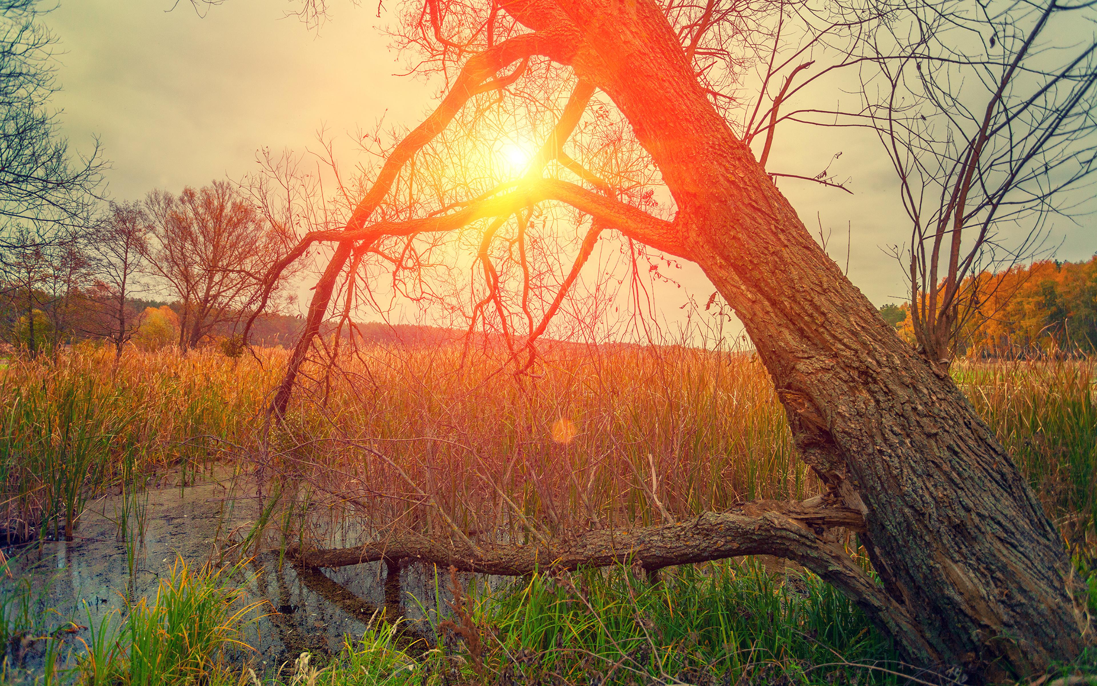 Hintergrundbilder Natur Sonne Sumpf Baumstamm Sonnenaufgänge und Sonnenuntergänge Gras 3840x2400