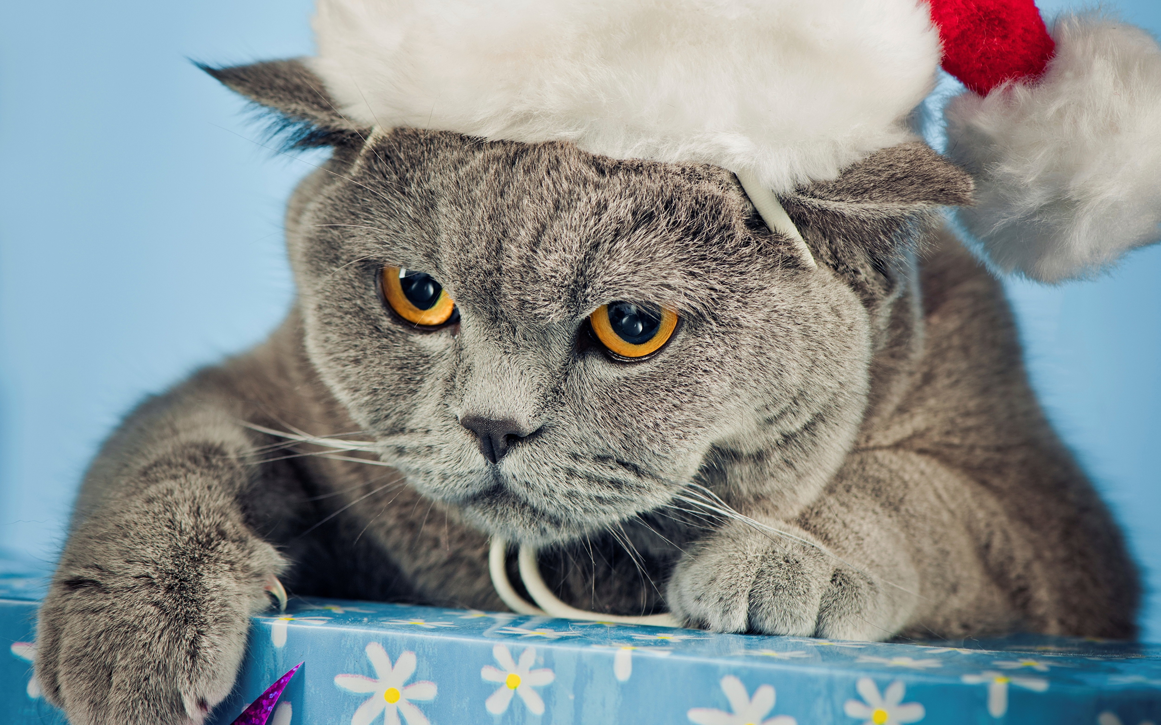 Picture cat New year Winter hat Animals 3840x2400
