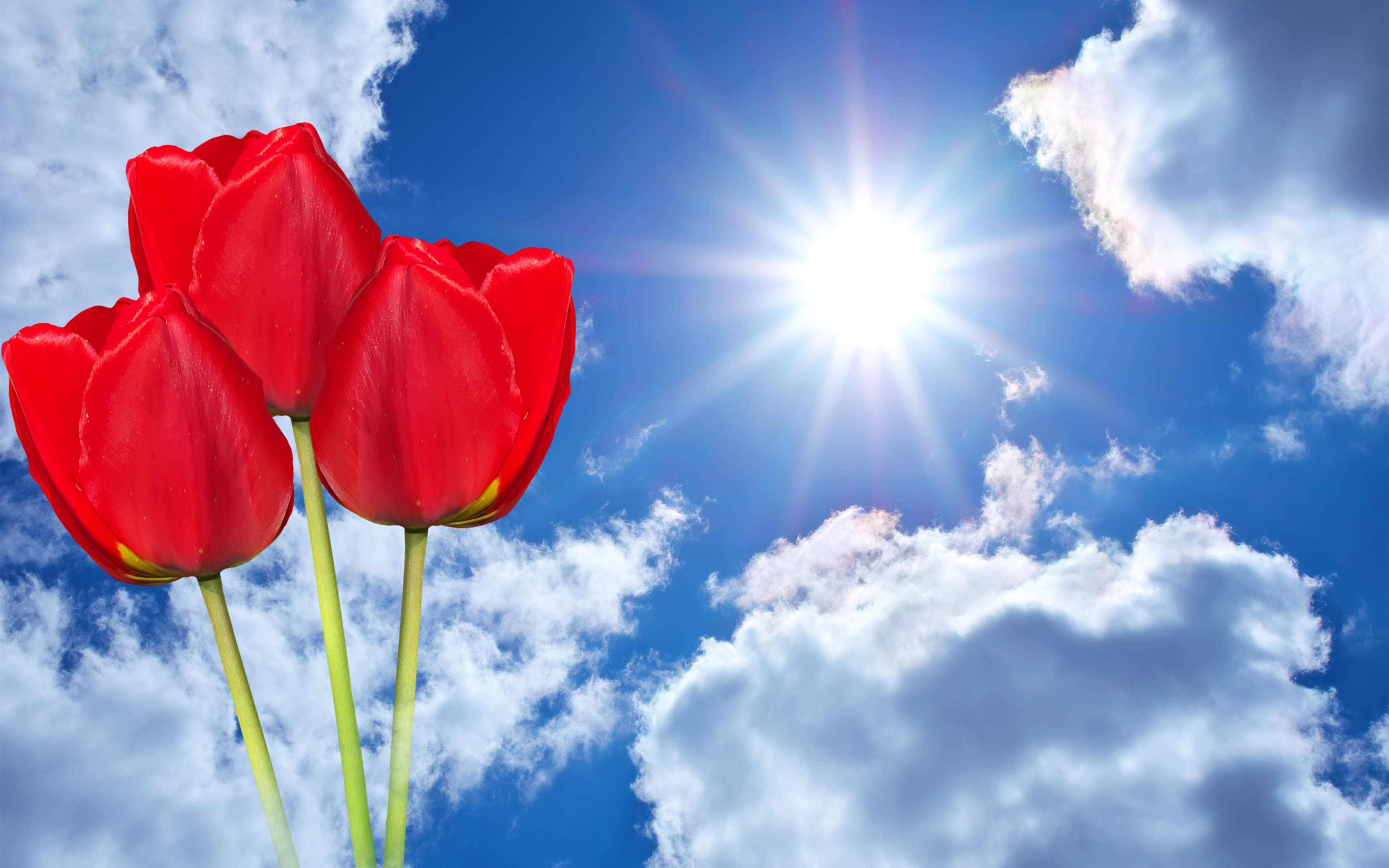 Pictures Sun Red Tulips Sky Flowers Three 3 Clouds 3840x2400 tulip flower