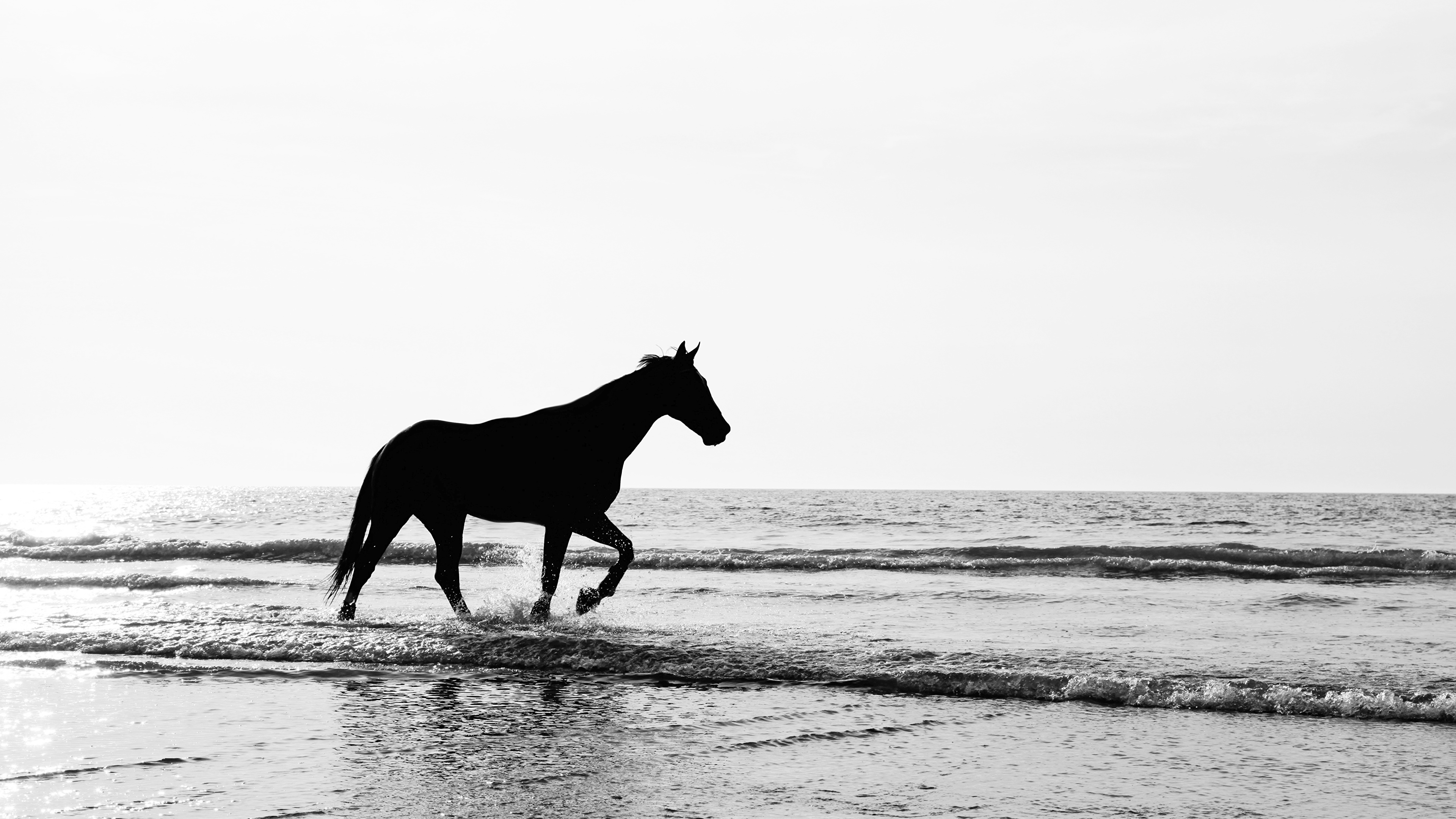 Images Horses Silhouettes Waves Animal 3840x2160