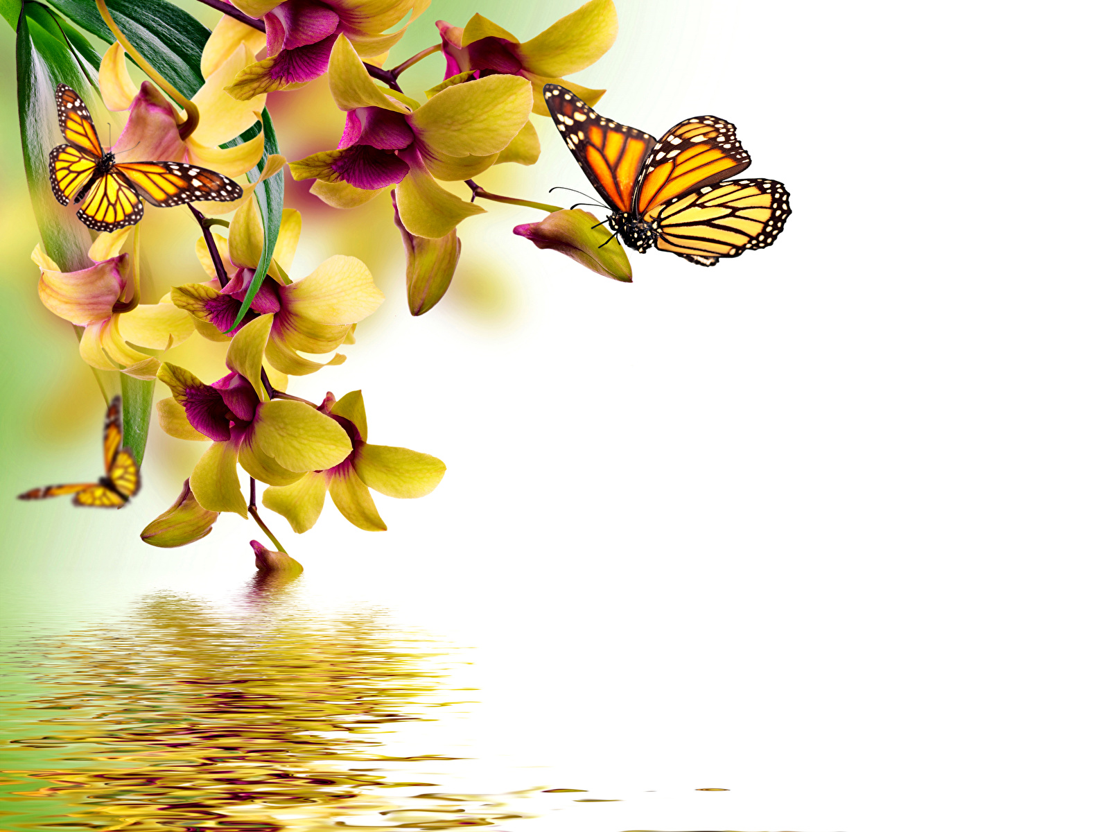 36 orchideen zeichnung vorlage  besten bilder von