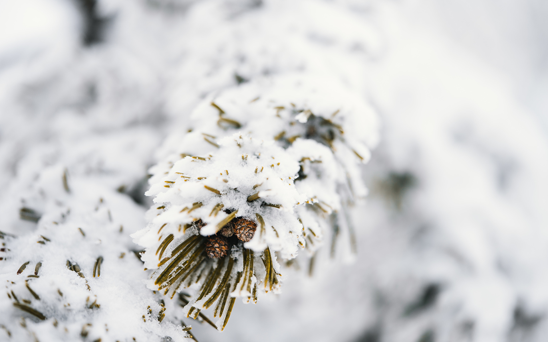 Desktop Wallpapers Bokeh Winter Nature Snow Branches 1920x1200 blurred background
