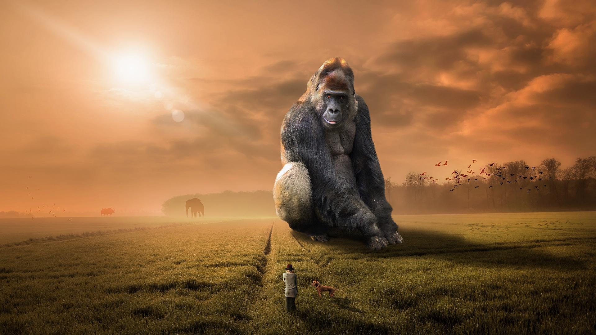 Fotos von Affen Fantasy Felder Gras sitzt ein Tier 1920x1080 Acker sitzen Sitzend Tiere