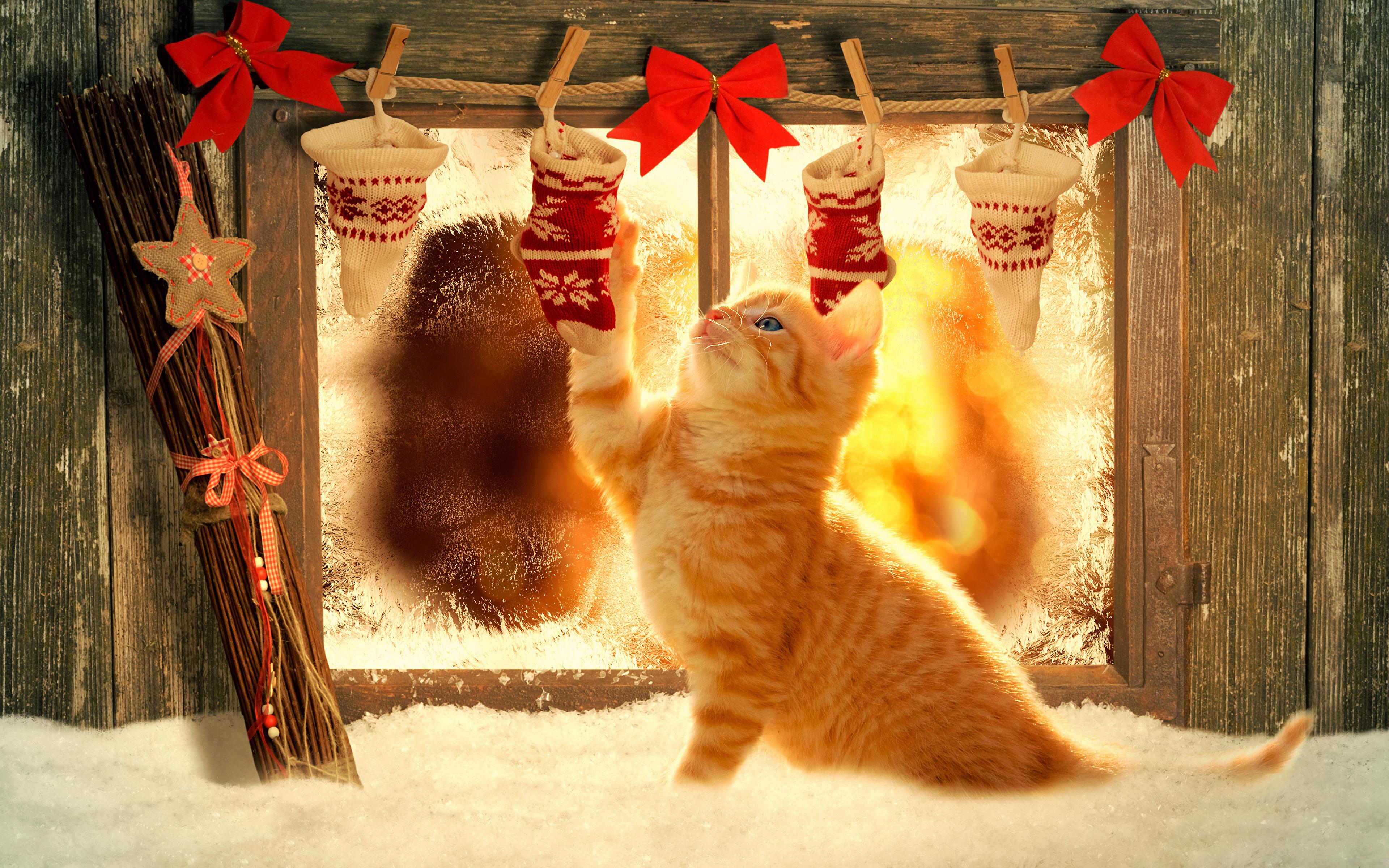 Wallpaper Kittens cat Christmas red orange Snow Window bow ...