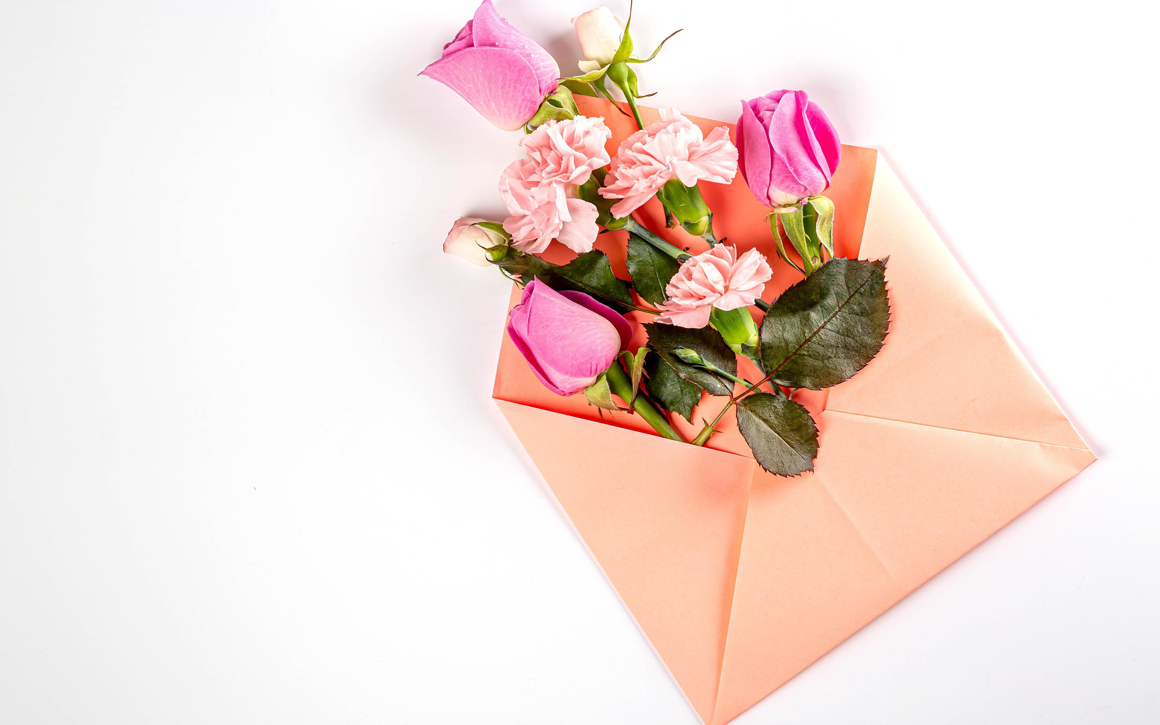 Fotos Briefumschlag Rose Nelken Blumen Vorlage Grußkarte Weißer hintergrund 3840x2400 Rosen Blüte