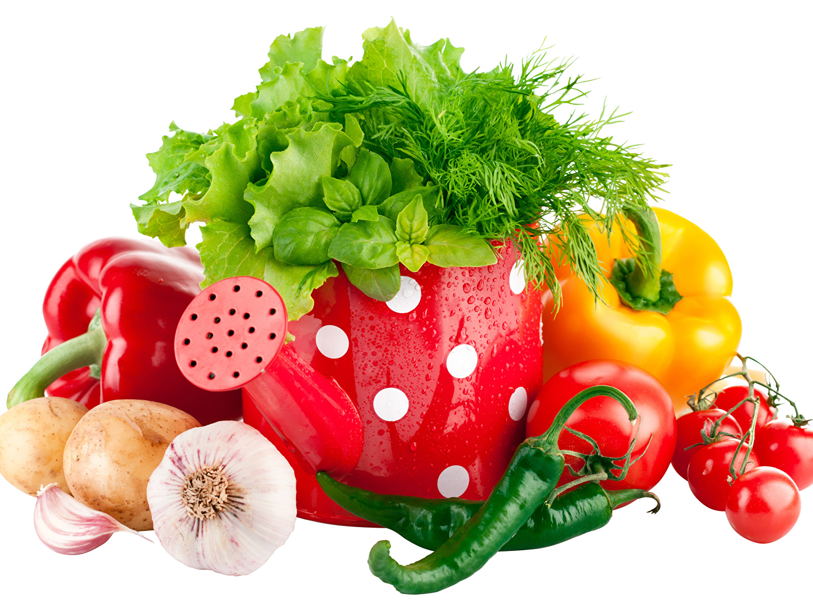 Images Onion Tomatoes Chili pepper Dill Garlic Food Vegetables Bell pepper White background 1600x1200 Allium sativum