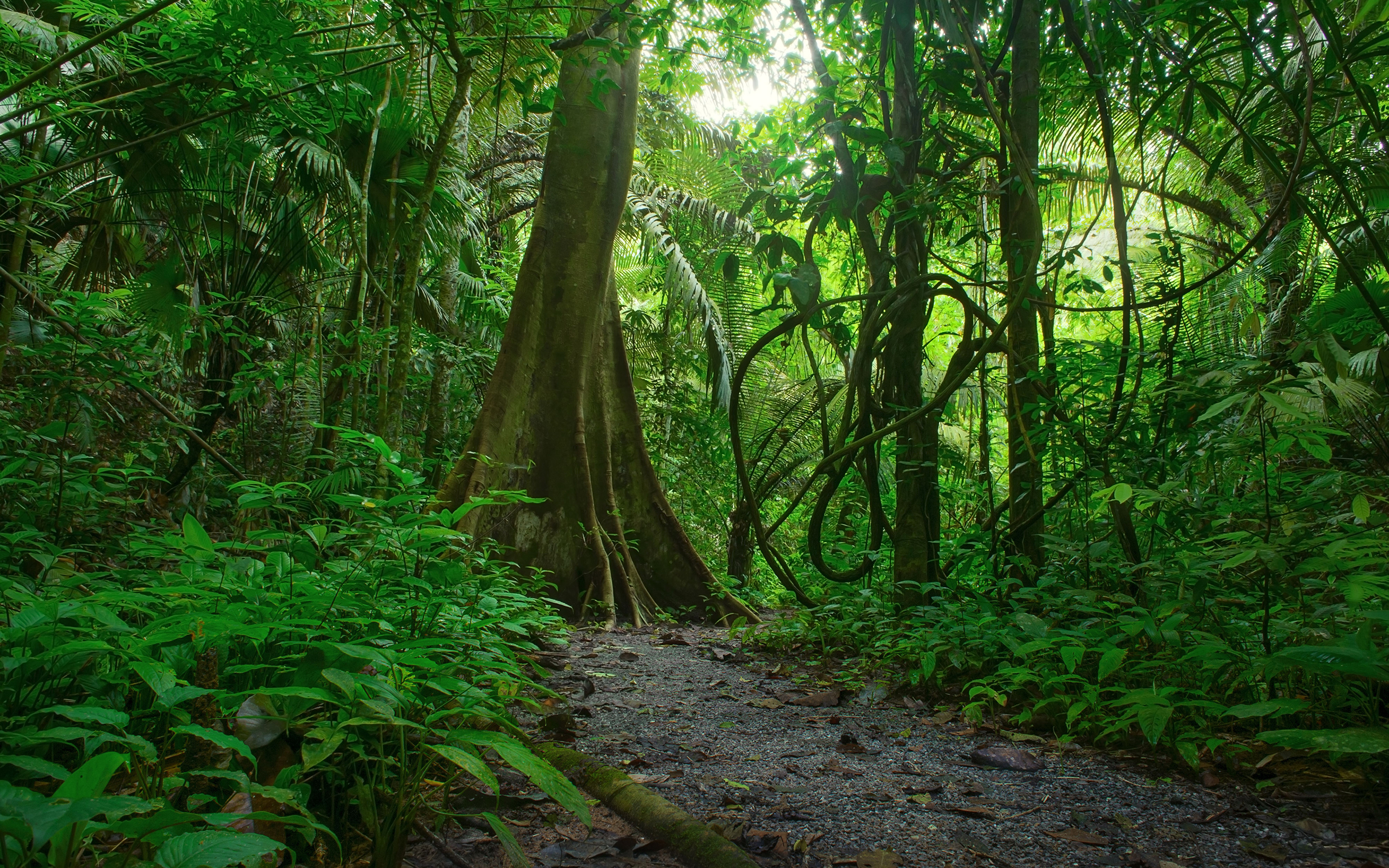 Photos Jungle Nature Forest Tropics Trees 3840x2400