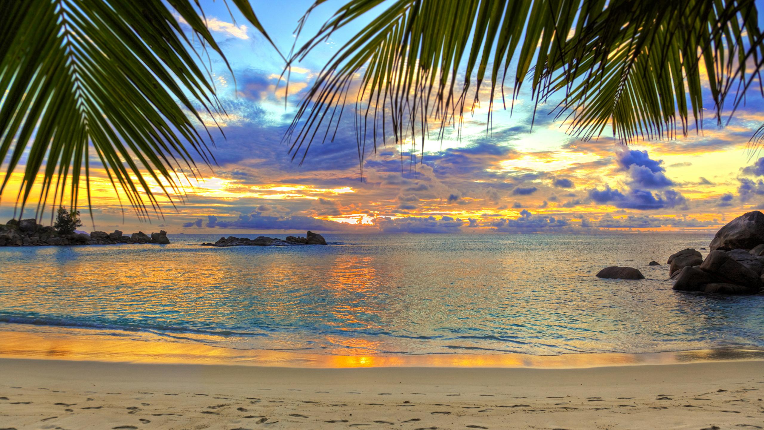 foto strand meer natur palmen 2560x1440